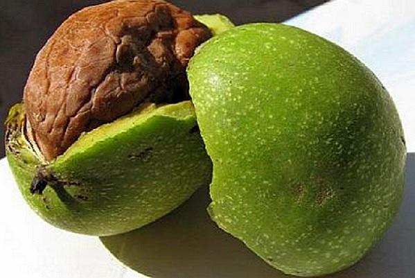 почти спелый орех