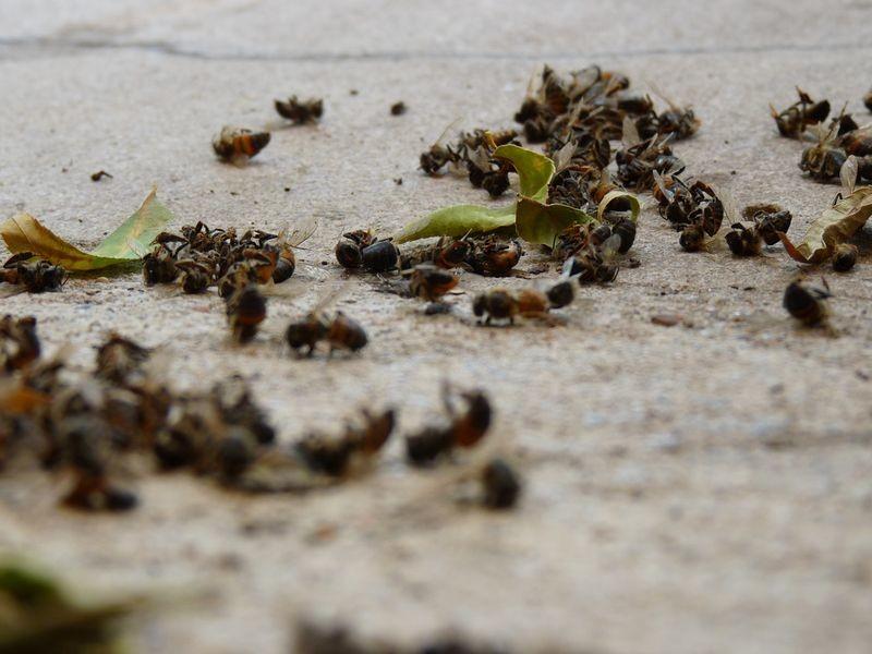 мертвые пчелки