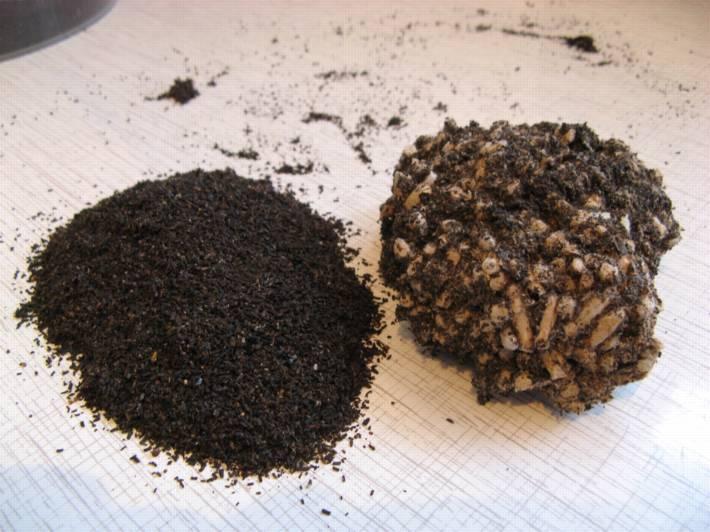 Огневка пчелиная настойка - способ применения и отзывы